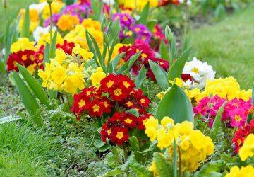 Quali piante e fiori piantare tra Febbraio e Marzo