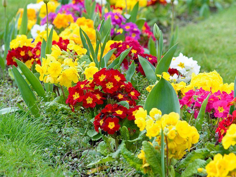 Quali piante e fiori si devono piantare tra febbraio marzo for Piante e fiori