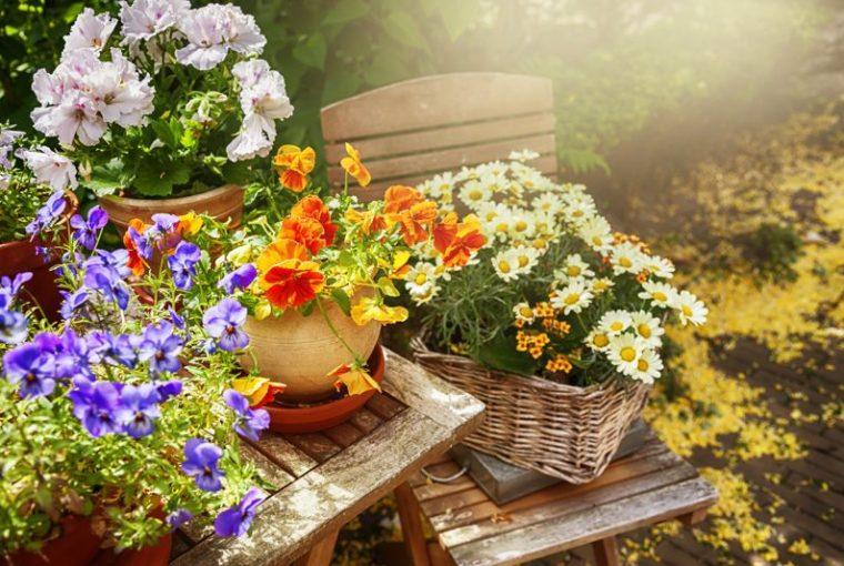 Cosa piantare in estate