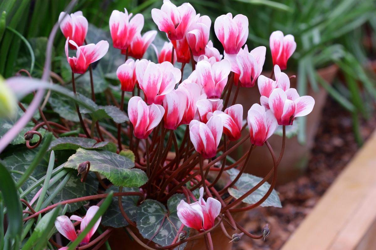 Fiori Di Stagione Settembre quali piante e fiori si devono piantare tra settembre