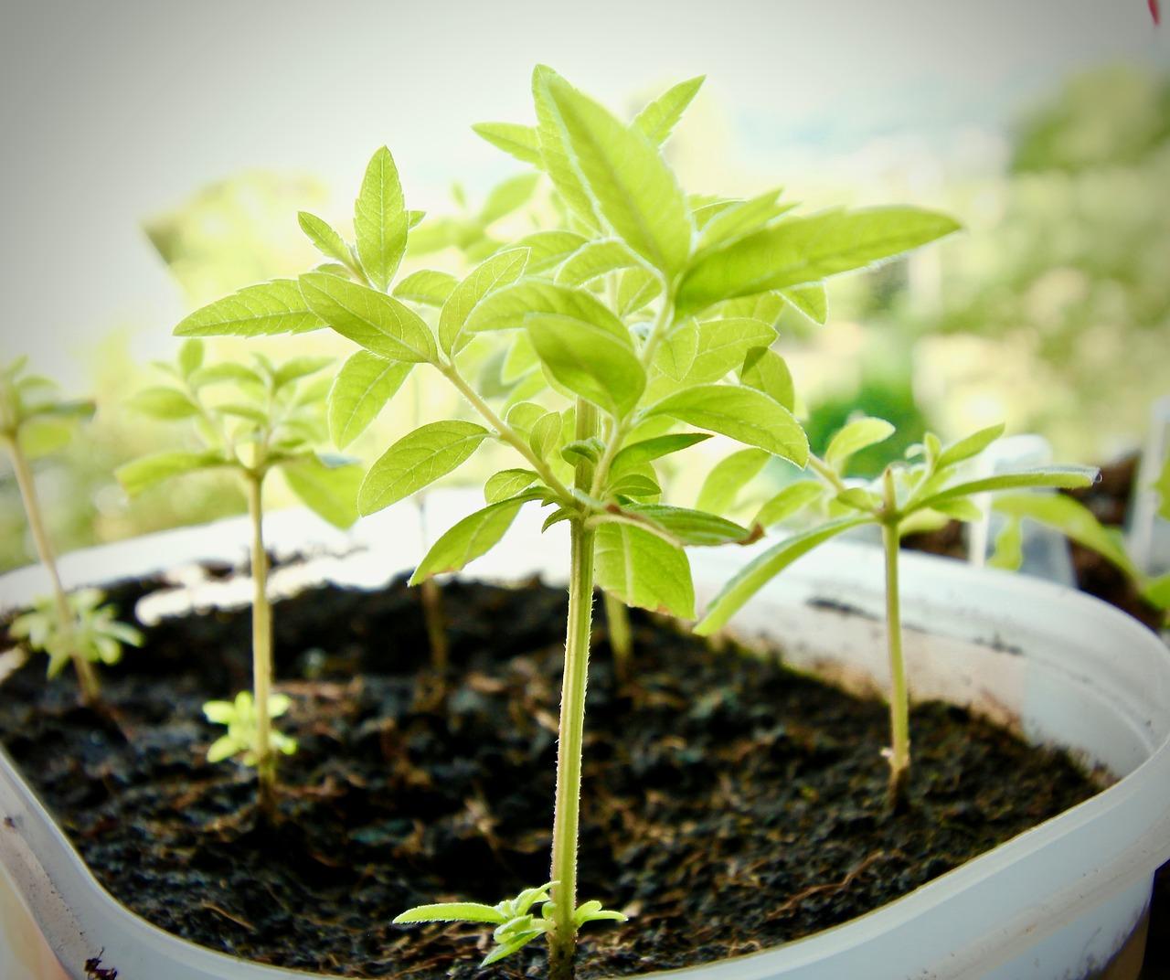 Cosa Piantare A Febbraio quali piante e fiori si devono piantare tra febbraio/marzo