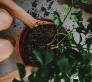 Come coltivare alberi in vaso