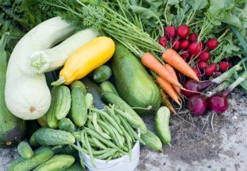 Cosa piantare e seminare ad Agosto